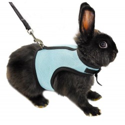 Hamster Rabbit Harness & Leash Set