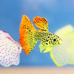 Goldfisch - leuchtend - Aquariumdekoration