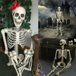 Full life size human skeleton - movable - Halloween decoration - 40cm