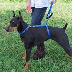 Dog training - lead pull correction