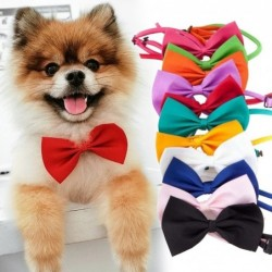Decorative bow-tie - collar - for dogs / cats - adjustable strap