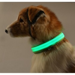 LED dog collar - luminous / flashing - safety night walk