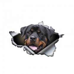 3D Rottweiler - vinyl car sticker - 13 * 8.4cm