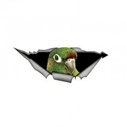 Zielona papuga 3D - naklejka samochodowa 15 * 6cm
