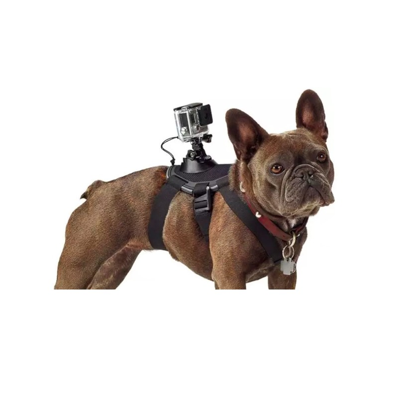 GoPro mount fastening chest strap mount for dog