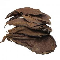 Naturalne liście terminii do bilansu wodnego w akwarium 10 sztuk